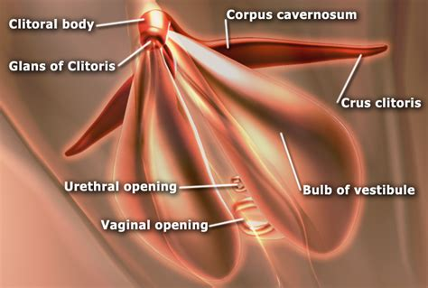 erection during skin exam picture 5