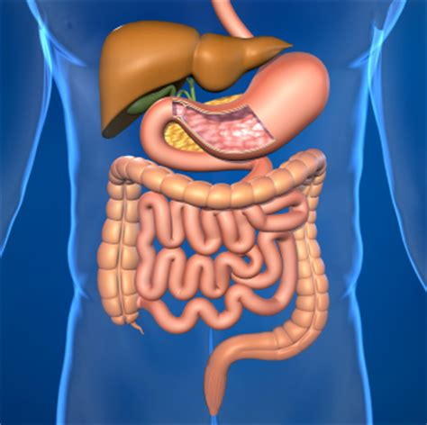 causes of slow digestion picture 6