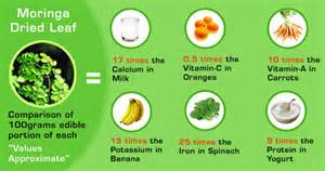 does moringa cure hiv picture 7