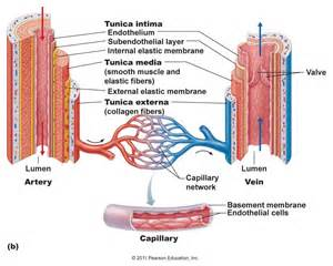 Sys blood pressure picture 9