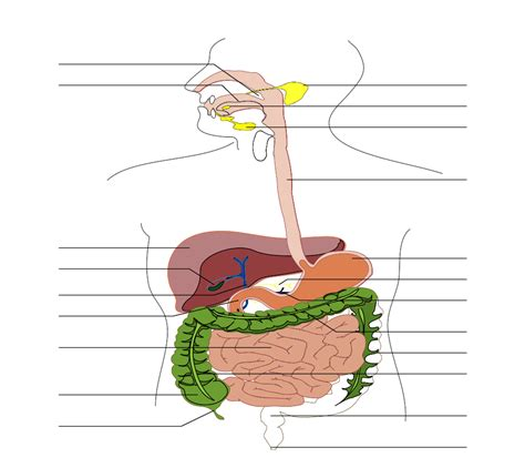 digestion track picture 7