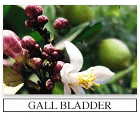 gall bladder herbal supplements picture 7