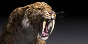 saber tooth tiger picture 2