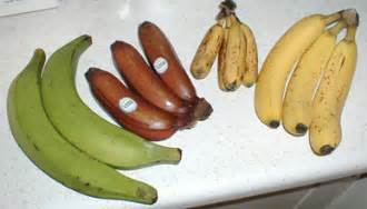 banana plantain varieties picture 2