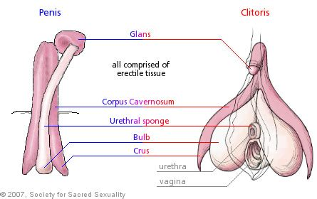 testosterone hormone during pregnancy picture 6