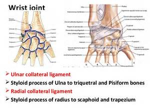 distal radial ulnar joint picture 2