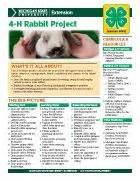 rabbit h problems picture 3
