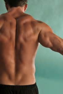 back muscle picture 5
