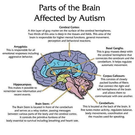 yeast in autistic kids picture 15