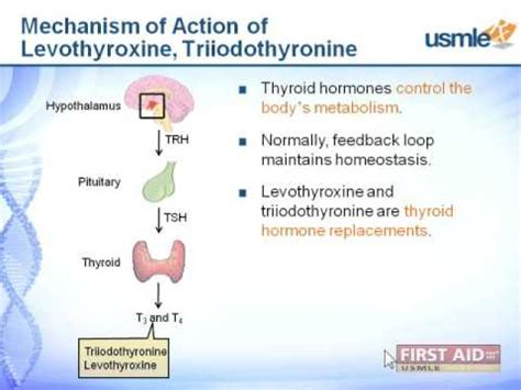 about thyroid picture 6