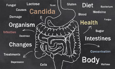 albicans; candida diet for contol picture 17
