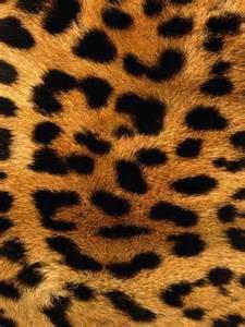 lleopard skin picture 5