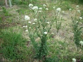 alfalfa and laminitis picture 11