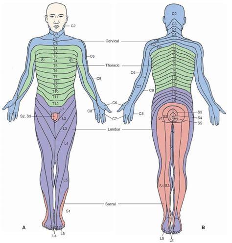 degenerative joint diseases picture 11