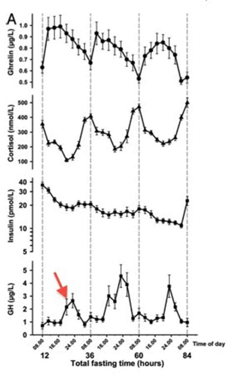 hgh levels while fasting picture 2