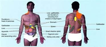 refer pain and gallbladder picture 7