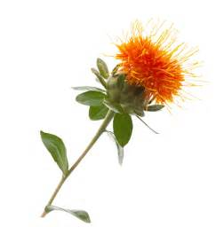 safflower nut oil picture 3