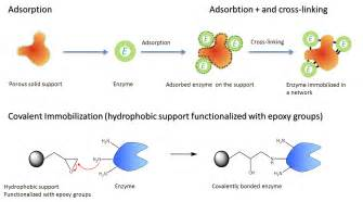 enzymes picture 11