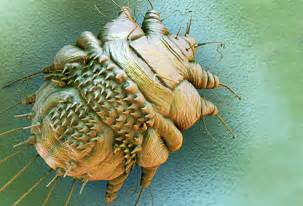 skin parasites picture 1