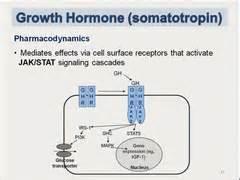 growth hormone dysregulation quizlet picture 1