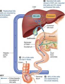 bile salts diarrhea weight loss picture 3