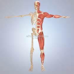 leg pain picture 7