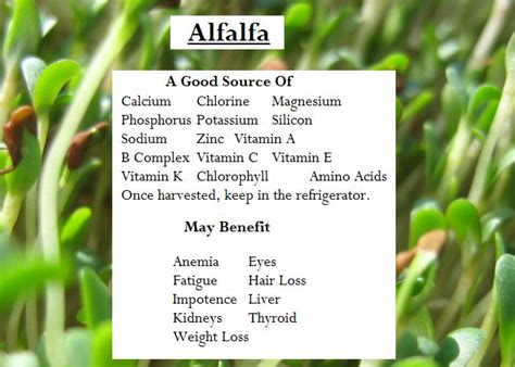 alfalfa leaf health benefit's picture 11