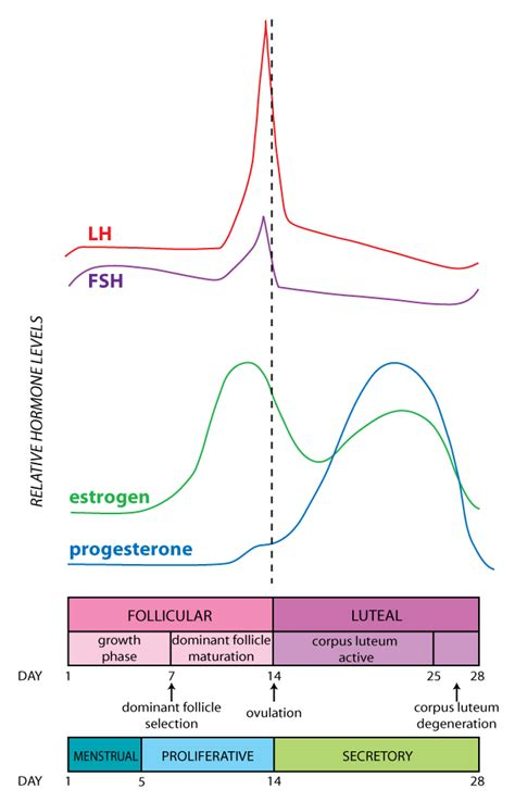 will blood flow to uturus decrease fsh picture 7