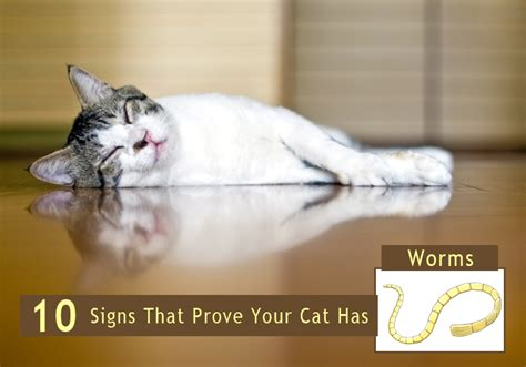 cat worm symptoms picture 10