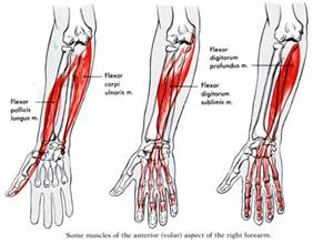 arm and muscle pain picture 17