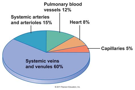 figure 8 of blood flow picture 7