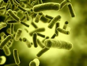 bacteria picture 14