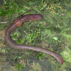 earth worm in picture 2