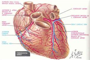 hemorrhoids sclerotherapy phenol coronary vasospasm picture 7