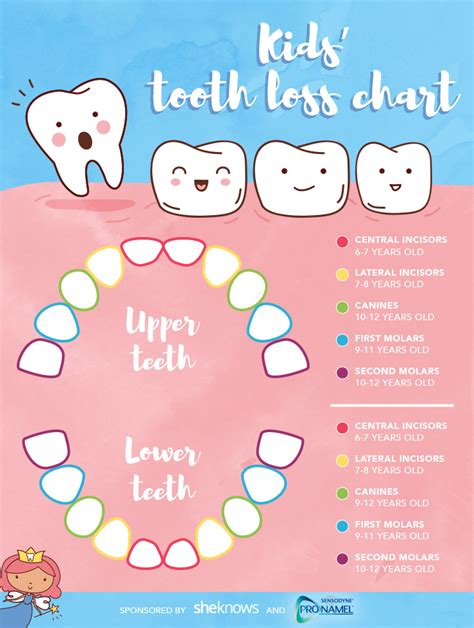child's teeth chart picture 14