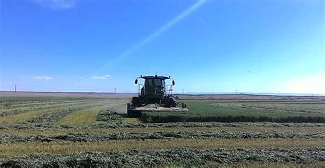 colorado alfalfa growers picture 2