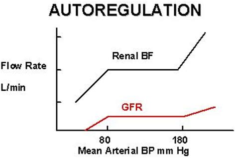 autoregulatory blood flow picture 9