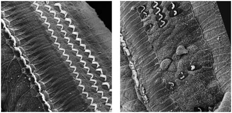 hair cells picture 9