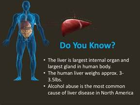 what are common diseases of the liver picture 3