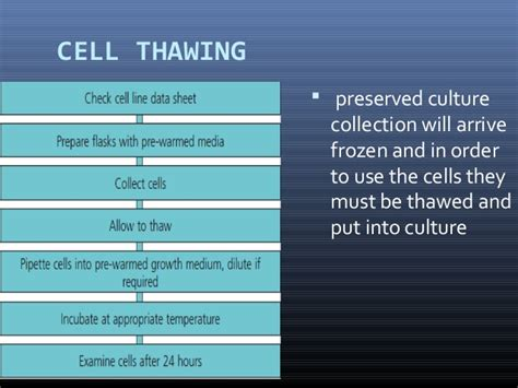 what to use for yeast infections picture 7