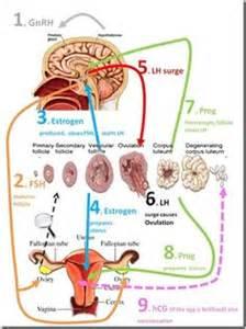 misoprostol to increase testosterone picture 9