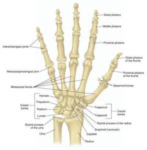finger joint picture 1