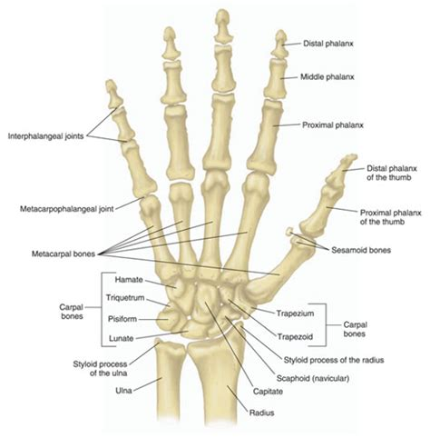pain in joints of fingers picture 1