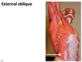 abdominal muscle strain picture 17