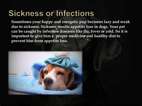 causes of canine loss of appetite picture 5