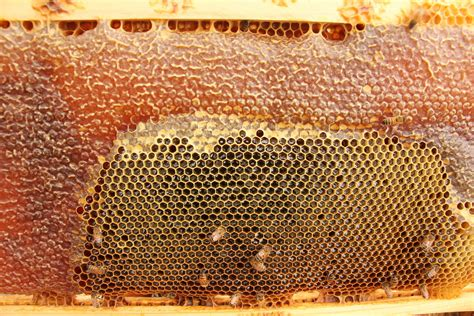 queenless hives picture 3