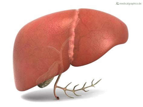 human liver how it works picture 1