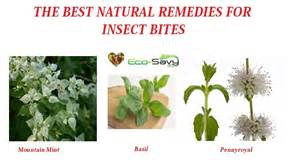 free herbal remedies for bugs picture 6