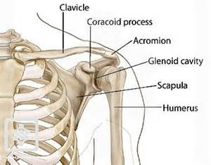 deltoid muscle injections picture 15
