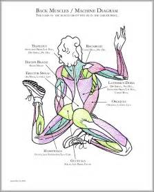 functions oe the muscle system picture 14